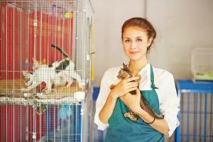 Volunteer at animal shelter