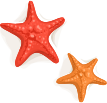 julypromo-starfish.png