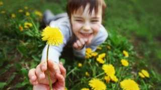 Child holding a dandelion in a field