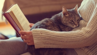 Woman with cat on her lap reading a book.