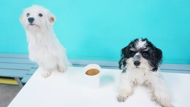 Two adorable dogs up for adoption.