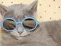 Cat videos help us lick the blues
