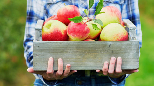 Woman holding a crate of apples.