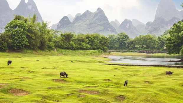 Countryside landscape and water buffalos in Yangsho, China