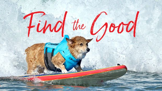 Surfing dog in life jacket