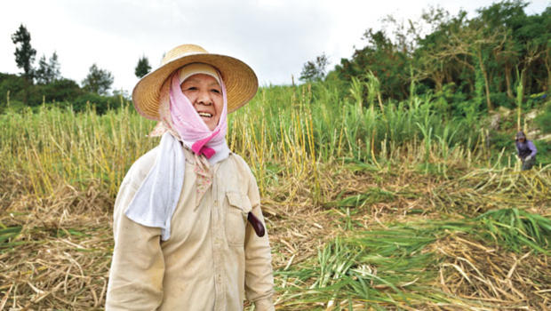 Woman working in the fields in Okinawa
