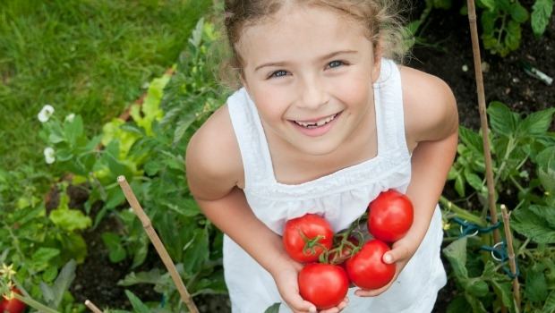 Little girl planting tomatoes