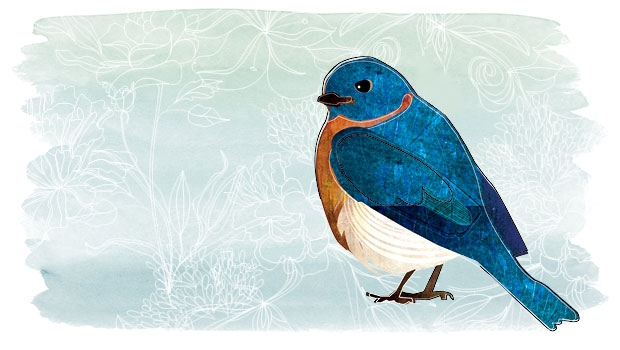The Bluebird Of Happiness Live Happy Magazine