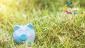 Piggy bank sitting in grass