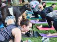 Goat yoga class