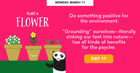 Monday, March 11 - Plant a flower.